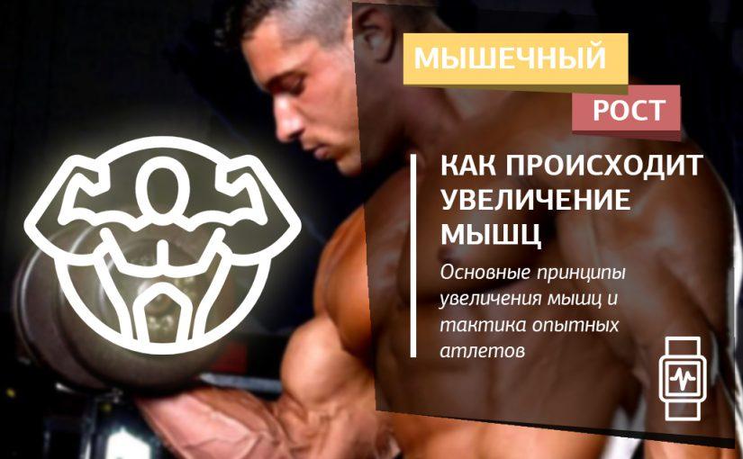 Как происходит увеличение мышц