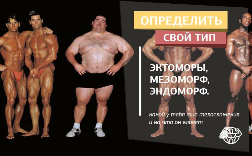 Эктоморф, мезоморф, эндоморф - как определить кто ты?