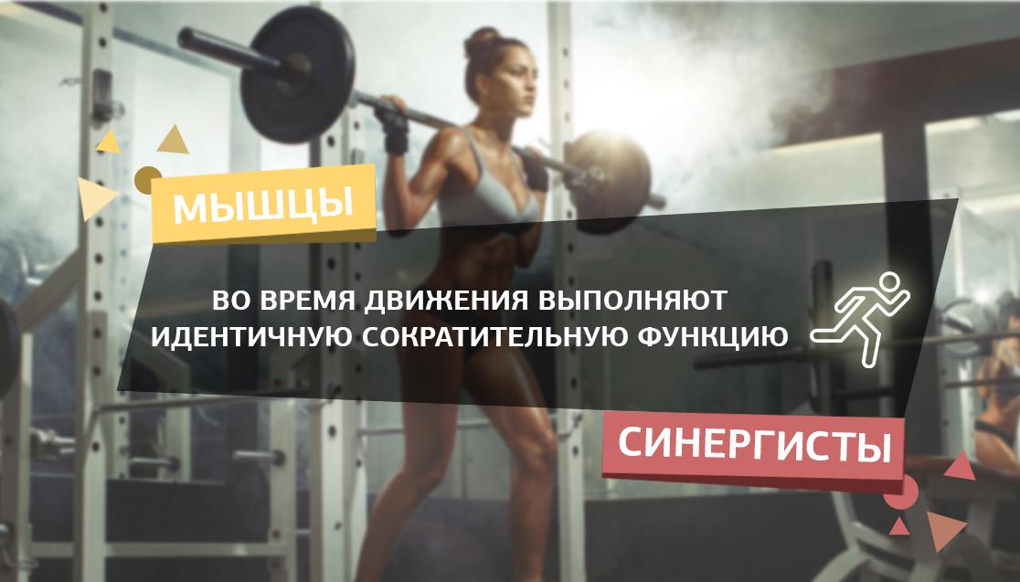 Мышцы синергисты для чего нужны